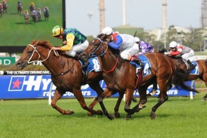 Tiger Tees is chasing his second win at Group 1 level during his 2014 Sydney Autumn Racing Carnival campaign.