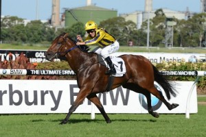 Bel Sprinter is likely to target the Group 1 Winterbottom Stakes this season