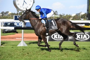 Avilius, above, is the favourite for the 2019 Winx Stakes at Randwick. Photo by Steve Hart.