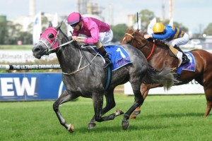 Catkins will defend her Emancipation Stakes title at Rosehill Gardens this weekend. Photo by: Steve Hart