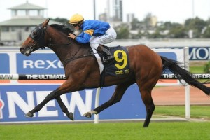 Pinstripe Lane is outright favourite for success in the 2014 Queensland Derby