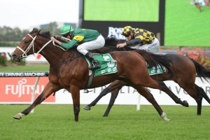 Moriarty is a leading chance for success in the 2014 Stradbroke Handicap