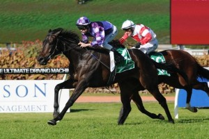 Trainer Jason Coyle has outlined a busy 2014 winter preparation for Scream Machine