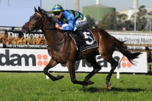Kapour is our pick to take out Saturday's Listed Premier's Cup at Rosehill Gardens. Photo: Steve Hart