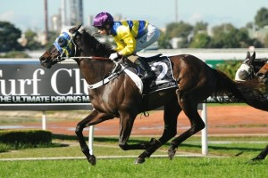 World Wide should do well in the rain-affected Christmas Cup due to a good record over soft-heavy tracks.