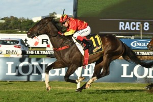 Calanda, above, is the early favourite for the George Moore Stakes at Doomben. Photo by Steve Hart.