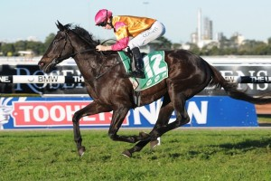 Shiraz has been confirmed in the 2015 Concorde Stakes final field. Photo: Steve Hart