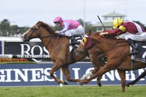 Oxford Poet (pink silks) leads Zin Zan Eddie (yellow cap) in 2016 Winter Challenge betting markets. Photo: Steve Hart