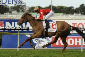 Countryman will target the 2015 Cameron Handicap this time. Photo: Steve Hart