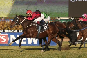 Rock Sturdy is a leading chance for success in the 2014 Bill Ritchie Handicap