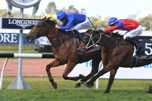 Alizee, above in the Godolphin royal blue colours, wins the Missile Stakes at Rosehill. Photo by Steve Hart.
