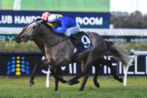 The James Cummings trained Subedar, above, is included in the final field for the Ming Dynasty Quality at Rosehill. Photo by Steve Hart.