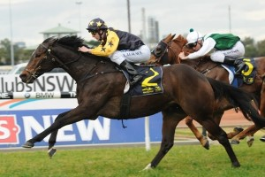Trainer Jarrod Austin is thrilled with the condition of Territory ahead of the 2015 Expressway Stakes. Photo: Steve Hart