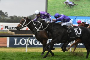Invincibella, above with white cap, and Noire, purple cap, quinella the Sheraco Stakes at Rosehill. Photo by Steve Hart.
