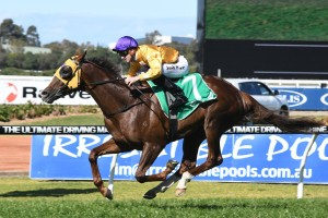 Gold Standard, above, can race on the speed or off the pace in the Golden Rose at Rosehill. Photo by Steve Hart.