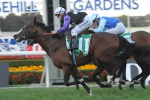 Trainer David Vandyke is hoping for a return to form for classy runner Prince Cheri