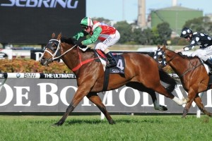 Riva De Lago is one of 21 horses nominated for the Sunshine Coast Cup on Saturday.