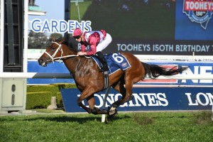 Arcadia Queen. above, wins the Theo Marks Stakes at Rosehill. Photo by Steve Hart.