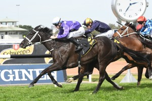 Noire. above in purple colours, scores a last to first win in the Shannon Stakes at Rosehill. Photo by Steve Hart.