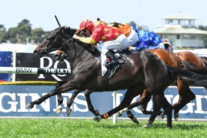 Auvray, above, scores a narrow win in the Colin Stephen Quality at Rosehill. Photo by Steve Hart.