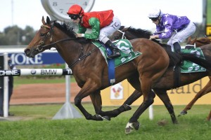 Zenalicious stormed home late to record an impressive victory in the 2016 Reginald Allen Quality at Rosehill Gardens this afternoon. Photo by: Steve Hart