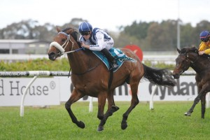 Brisbane Next for Queen Of The South Winner Amelie's Star?