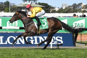 Mizzy, above, makes it three wins on the trot with her victory in the Golden Pendant at Rosehill. Photo by Steve Hart.
