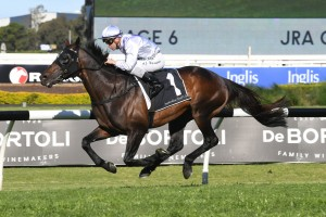 Stampede, above, is likely to set the pace in The Metropolitan at Randwick. Photo by Steve Hart.