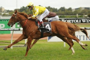 Criterion will be partnered by Tommy Berry in the 2016 Queen Elizabeth Stakes at Randwick on Saturday. Photo: Steve Hart