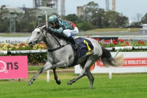 Trainer John O'Shea is confident that White Sage is good enough to compete at Group 1 level during the 2014 Sydney Autumn Racing Carnival.