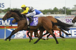 Mighty Lucky is the Races.com.au tip to win Saturday's Group 2 Eagle Farm Cup. Photo: Steve Hart