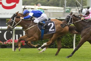 Permit will lead the charge of four Chris Waller-trained horses in the 2014 Parramatta Cup