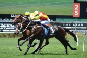 Good Project has earned his chance in the Queensland Guineas after his win on Saturday (pictured).