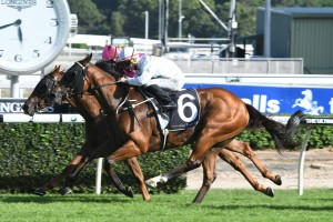 No plans for Stradbroke Handicap for Moreton Cup winner Deploy