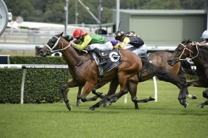 Heart Testa was a dominant winner of the Southern Cross Stakes at Randwick on Saturday.