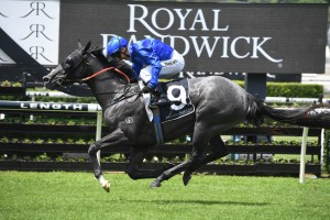 Tenley, above, is one of the many Godolphin chances in the 2019 Golden Slipper at Rosehill. Photo by Steve Hart.