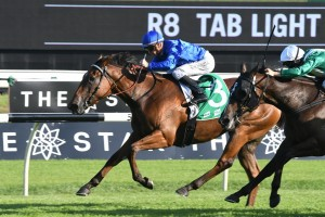 Alizee, above, will take her place in the 2018 Vinery Stud Stakes at Rosehill. Photo by Steve Hart.