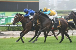 Diamond Tathagata is the Races.com.au tip to win Saturday's Listed The Rosebud. Photo: Steve Hart