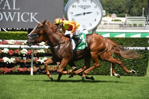 Quackerjack, above, scores a last stride win in the Liverpool City Cup at Randwick. Photo by Steve Hart.