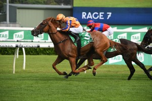 Te Akau Shark, above, wins the 2020 Chipping Norton Stakes at Randwick. Photo by Steve Hart.