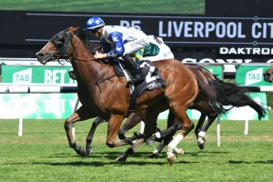 Crack Me Up, above, is on target for the Doncaster Mile after winning the Liverpool City Cup at Randwick. Photo by Steve Hart.