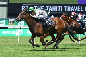 Just Shine finished over the top of his rivals in The Tahiti Travel Connection Handicap. Photo by: Steve Hart