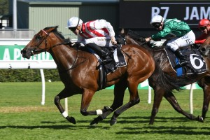 Shoals, above, bounces back to form to win the Surround Stakes at Randwick. Photo by Steve Hart.