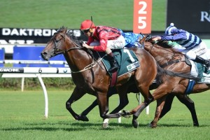 Hallowed Crown will jump from the outside gate in the Group 1 Rosehill Guineas.