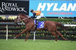 Nature Strip, above, will be set for the T J Smith Stakes at Randwick. Photo by Steve Hart.