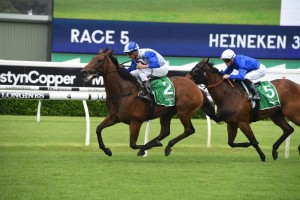 The Bostonian, above in white colours with blue sleeves, is being at the Winx Stakes at Randwicjk, Photo by Steve Hart.