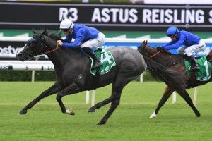 Tenley, above in the royal blue colours with the white cap, secures a spot in the 2019 Golden Sliipper with a win in the Reisling Stajkes at Randwick. Photo by Steve Hart.