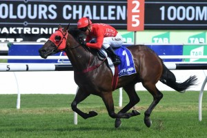Redzel, above, was in fine form with a Randwick barrier trial win in preparation for the 2018 T J Smith Stakes at Randwick. Photo by Steve Hart.