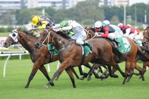 A Time For Julia has produced a strong sprint to beat Lilliburlero on the line in the 2014 Roy Higgins Tribute Quality