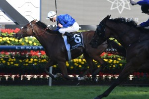 Doncaster Mile winner It;s Somewhat, above, is the top weight for the Sir Rupert Clarke Stakes at Caulfield. Photo by Steve Hart.
